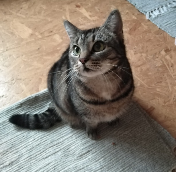 Katzenzuflucht E V Katzenvermittlung In Nrw Herzlich Willkommen